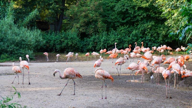 Flamingi stoją zoo w Praga zdjęcia stock