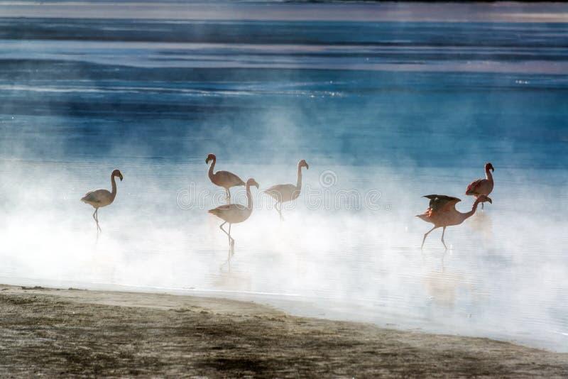 Flamingi w Boliwia zdjęcia stock