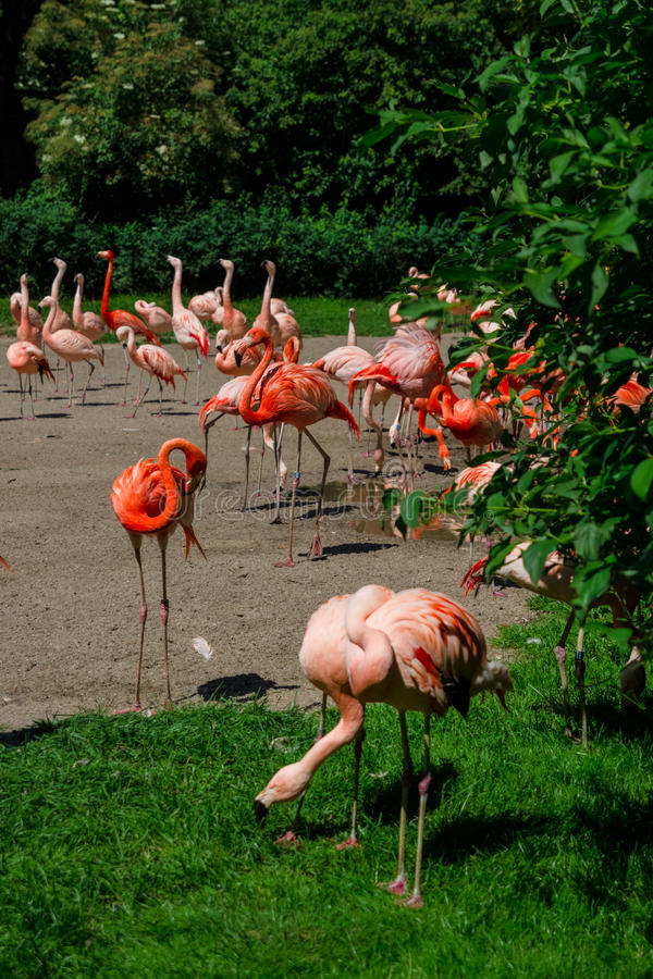 Flamingi w zoo fotografia stock