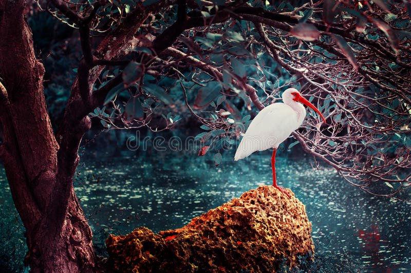 Flamingo. Processed image of a flamingo, placed in a surreal environment stock photos