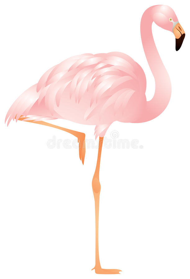 flamingo vektor illustrationer