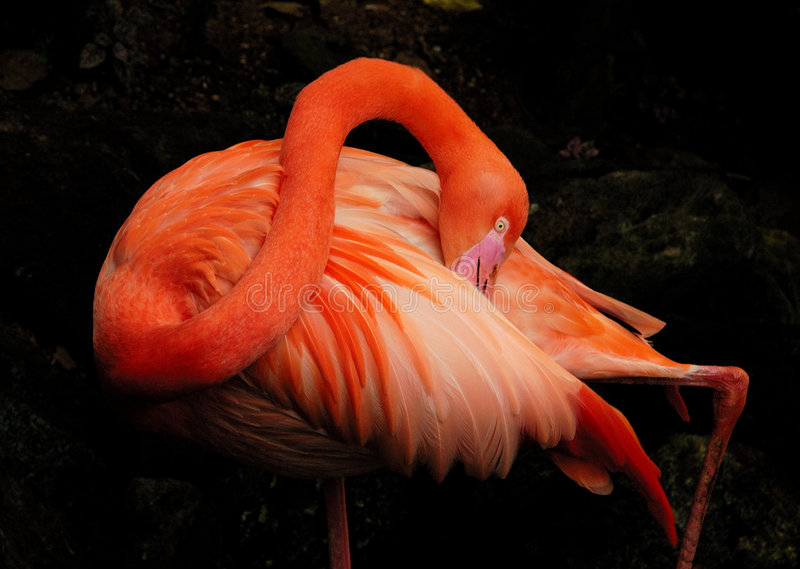 Download Flamingo (2) stock image. Image of bush, green, portrait - 2306529