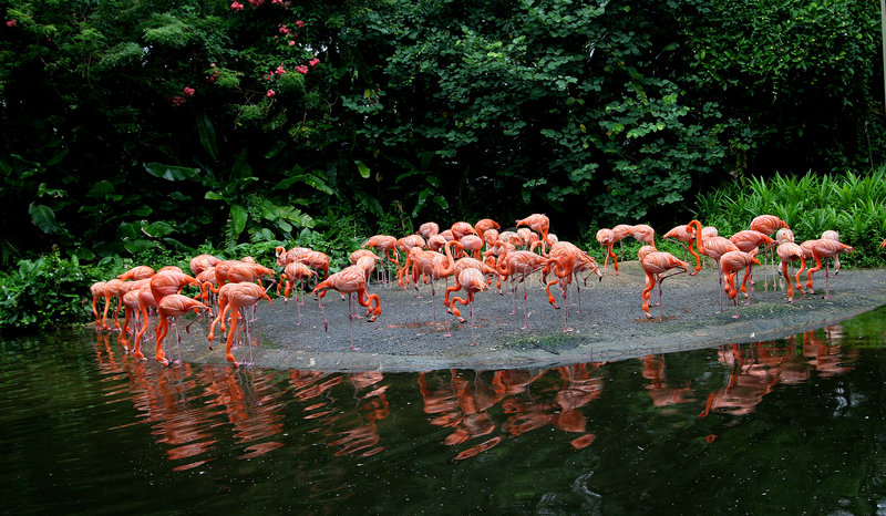 Flamingo stock afbeelding