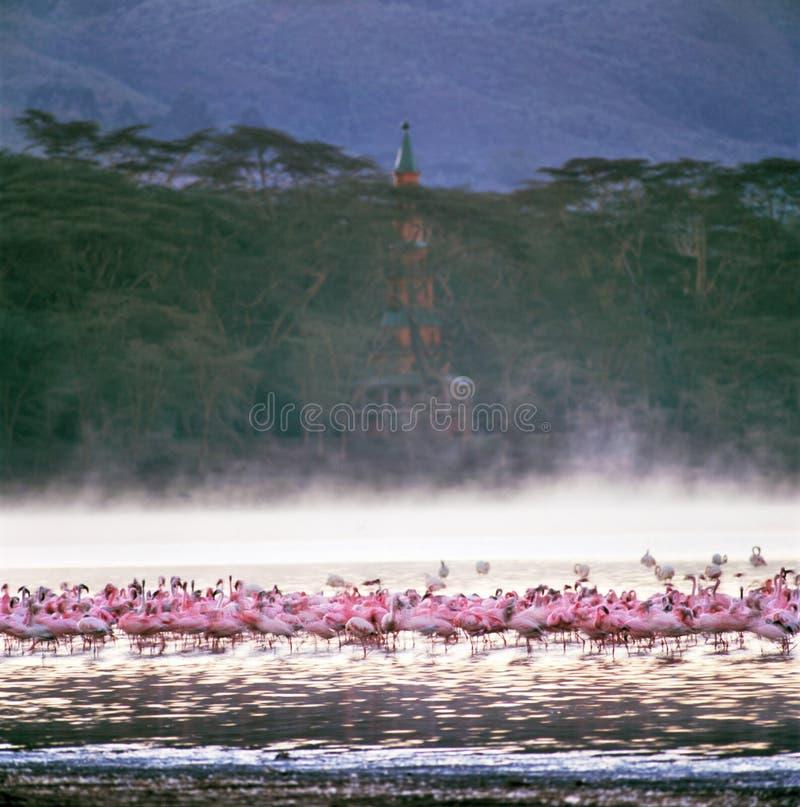 Free Flamingo Stock Photography - 57519462