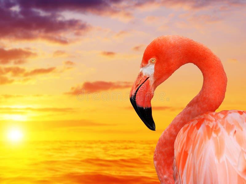 Flamingo bei Sonnenuntergang stockbild