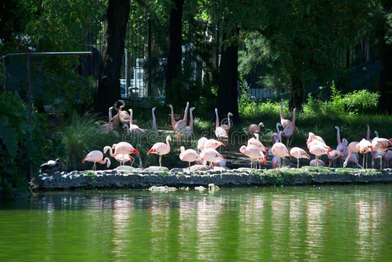 Flamingo bij de dierentuin royalty-vrije stock foto's