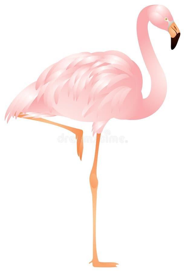 Flamingo binnen
