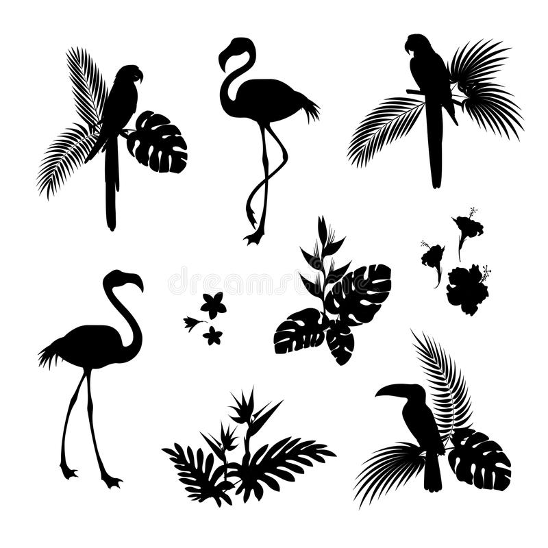 Flamingo bird and Parrot bird black silhouettes. The leaves of the Palm trees and tropical flowers black silhouette. Vector illustration isolated circuit vector illustration