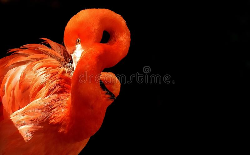 Flamingo, Bird, Water Bird, Beak Free Public Domain Cc0 Image