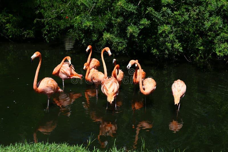 Flamingo buddies lizenzfreie stockfotos