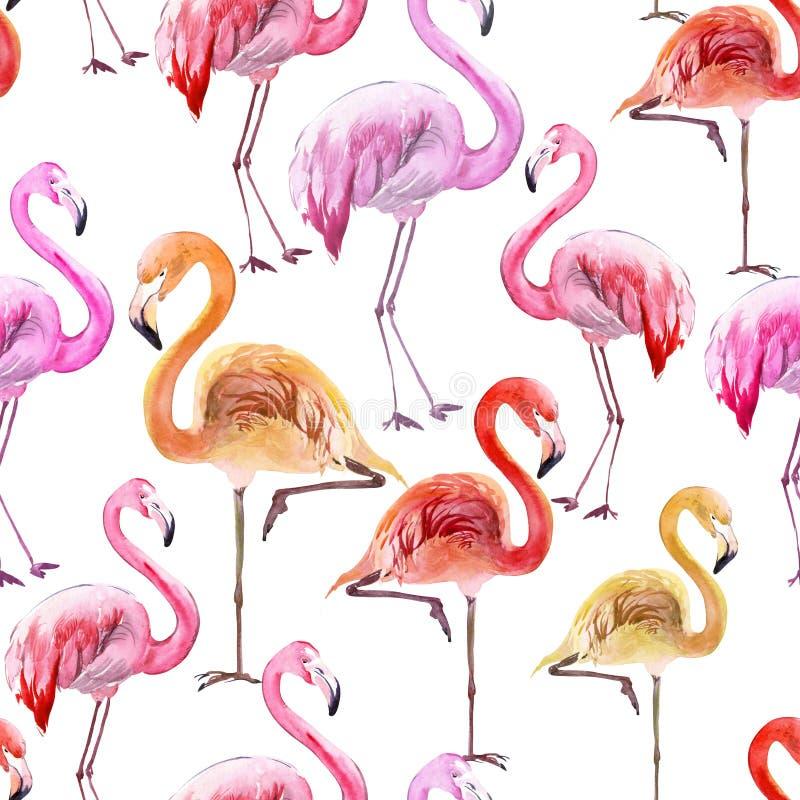 Flamingo colorido bonito no fundo branco Teste padrão sem emenda exótico Pintura da aguarela ilustração stock
