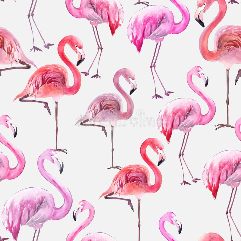Flamingo colorido bonito no fundo branco Teste padrão sem emenda exótico Pintura da aguarela Ilustração tirada e pintada da mão ilustração stock