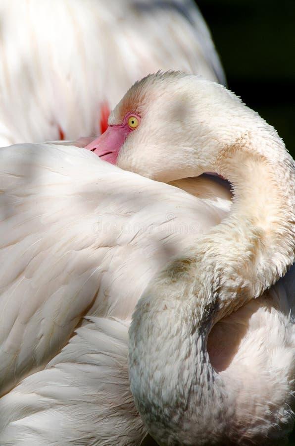 Flamingo cor-de-rosa bonito imagem de stock