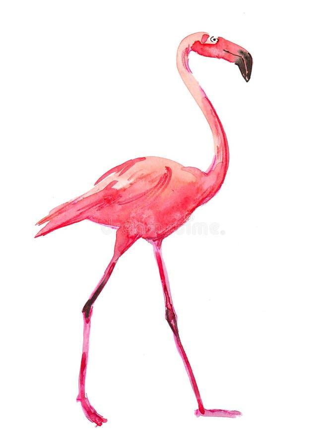 Flamingo cor-de-rosa da aquarela ilustração stock