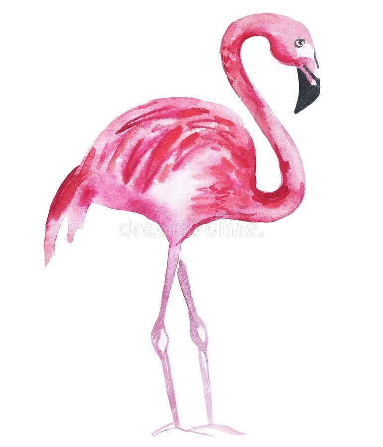 Flamingo cor-de-rosa isolado em um fundo branco Ilustra??o da aguarela ilustração royalty free
