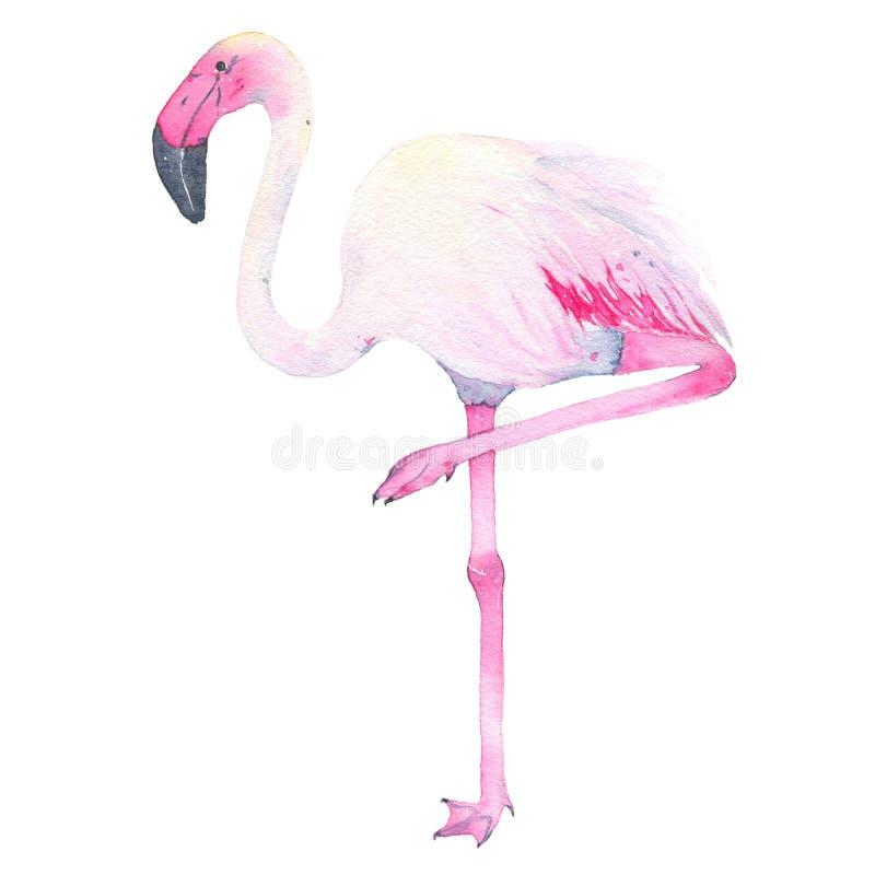 Flamingo cor-de-rosa tropical pintado à mão da aquarela isolado no fundo branco ilustração do vetor