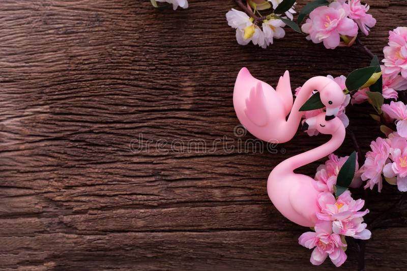 Flamingo couple in love with pink cherry blossom on wood table stock image