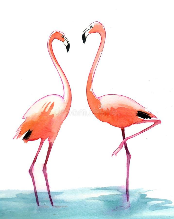 Flamingo da aquarela ilustração do vetor