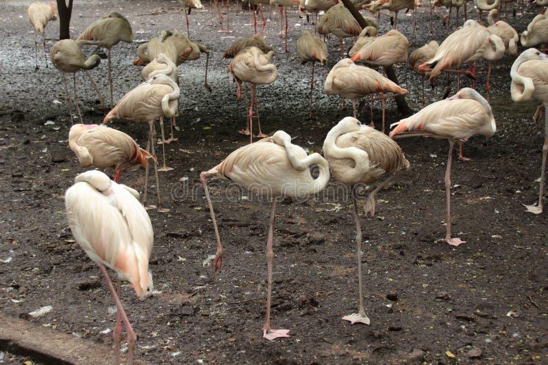 Flamingo in de wildernis royalty-vrije stock fotografie