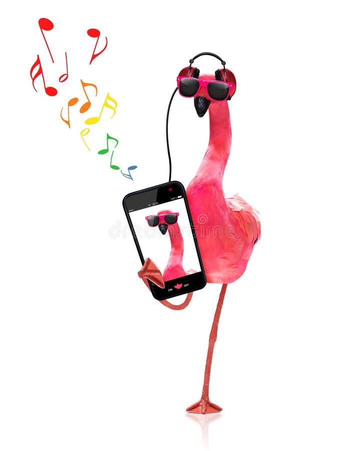 Flamingo die aan muziek luisteren stock foto