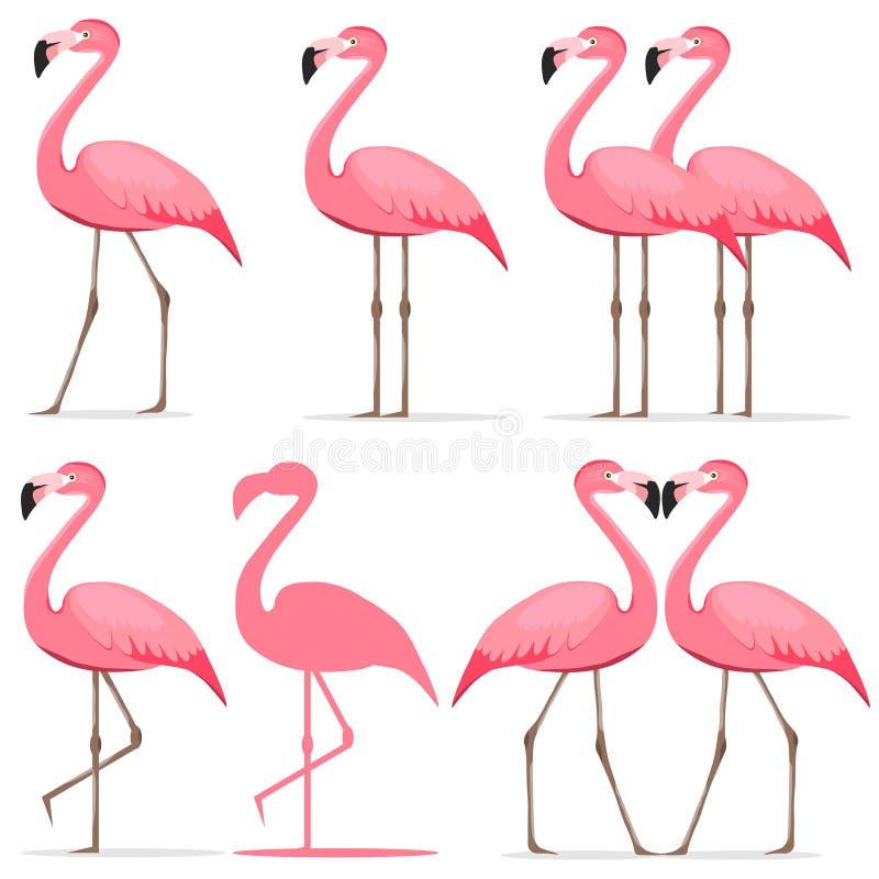 Flamingo, ein Satz rosa Flamingos