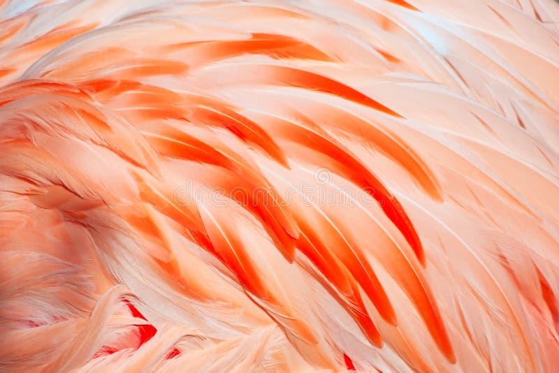 Flamingo feathers stock photos
