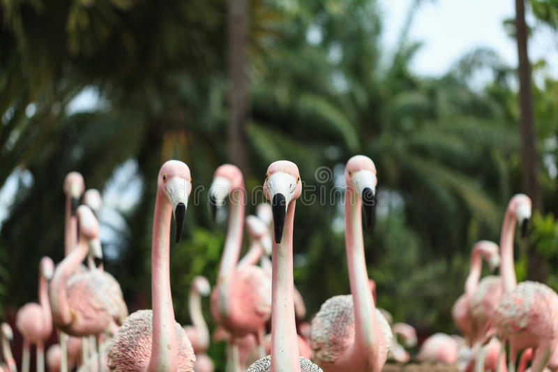 Download Flamingo stock image. Image of animal, site, romance - 33342883