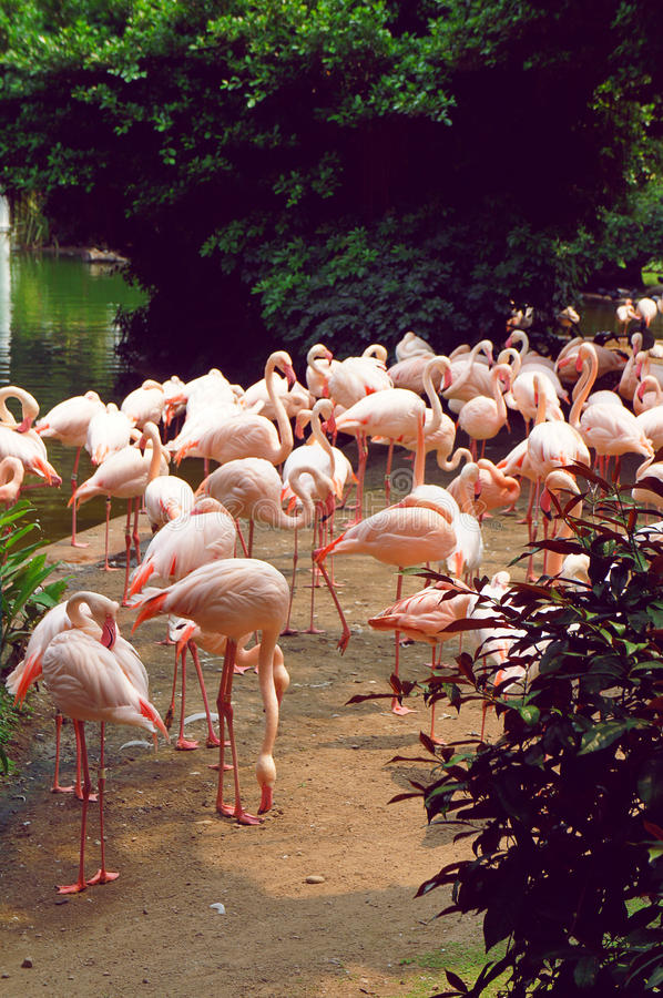Flamingo i Kowloonen parkerar av Hong Kong fotografering för bildbyråer