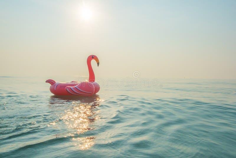 Flamingo im Meer lizenzfreies stockfoto