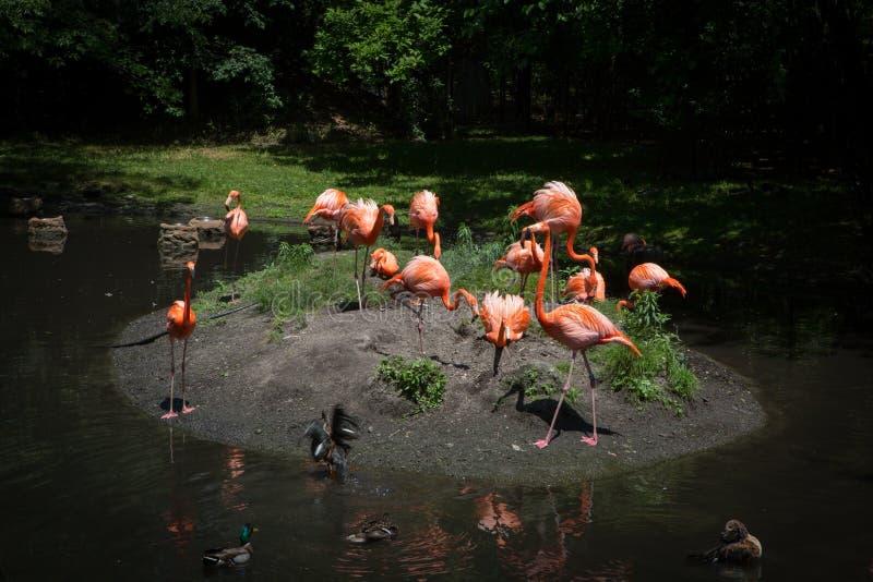 Flamingo Island stock photo