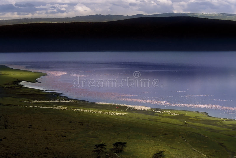 flamingo jeziora fotografia stock