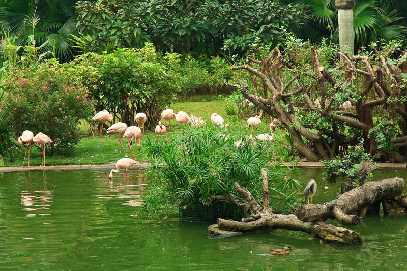 Download Flamingo In Kowloon Park Royalty Free Stock Images - Image: 11610639