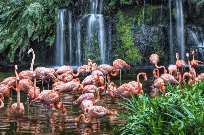 Flamingo Lake At Jurong Bird Park Stock Images