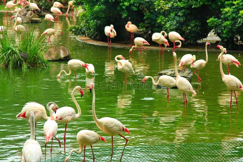 Flamingo no parque de Kowloon fotos de stock royalty free