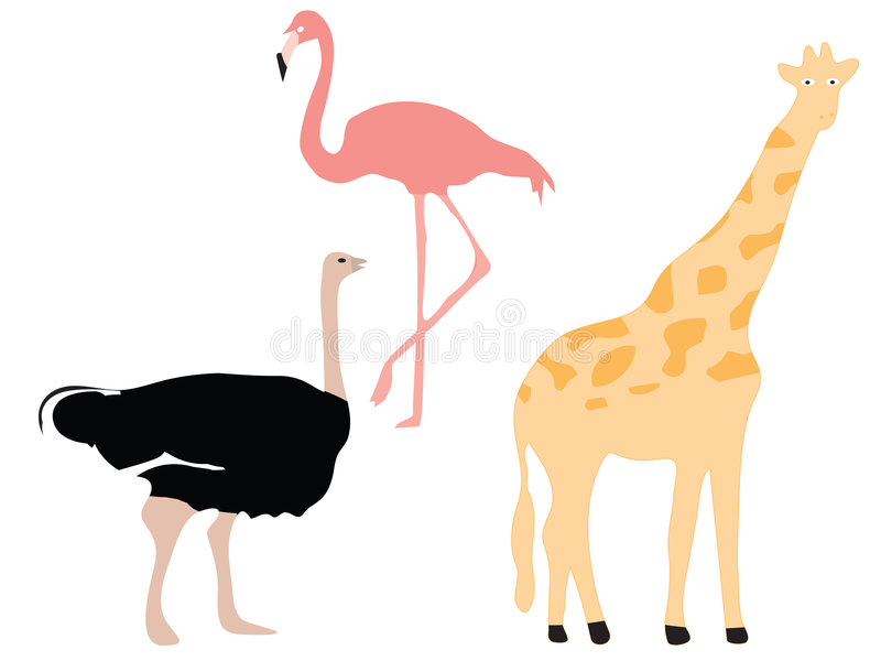 Flamingo, ostrich and giraffe vector illustration