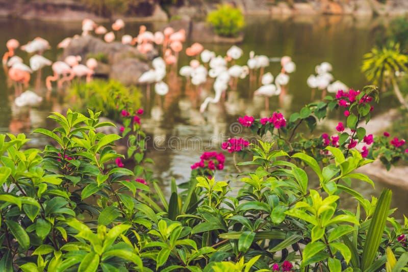 Flamingo på dammet på zoo royaltyfria foton