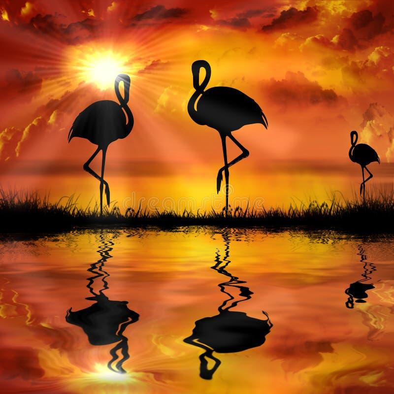 flamingo på en härlig solnedgångbakgrund