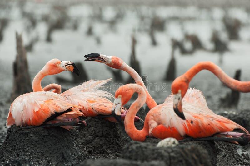 Flamingo nest - photo#32