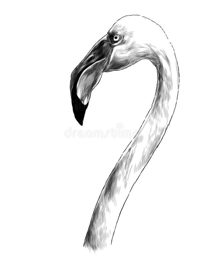 Flamingo principal do pássaro com pescoço longo lateralmente no perfil ilustração stock