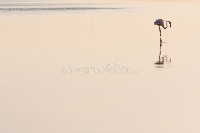 Download Flamingo Profile stock photo. Image of reflexion, wildlife - 15128892