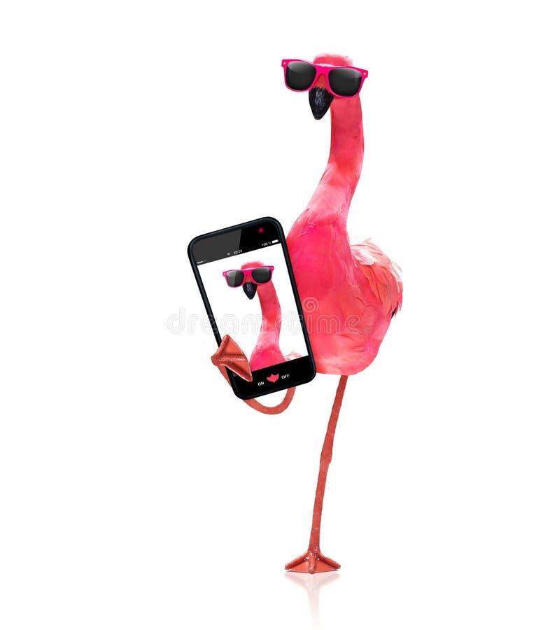 Flamingo que toma um selfie foto de stock royalty free