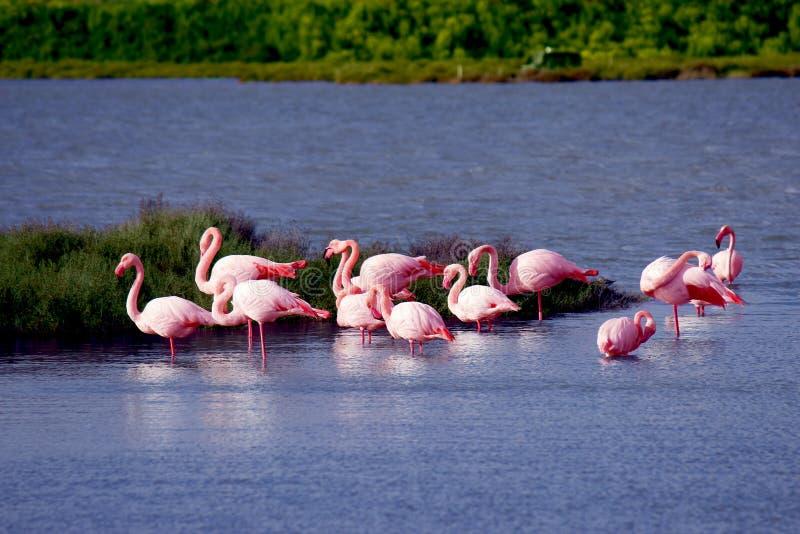 Flamingo's royalty-vrije stock foto
