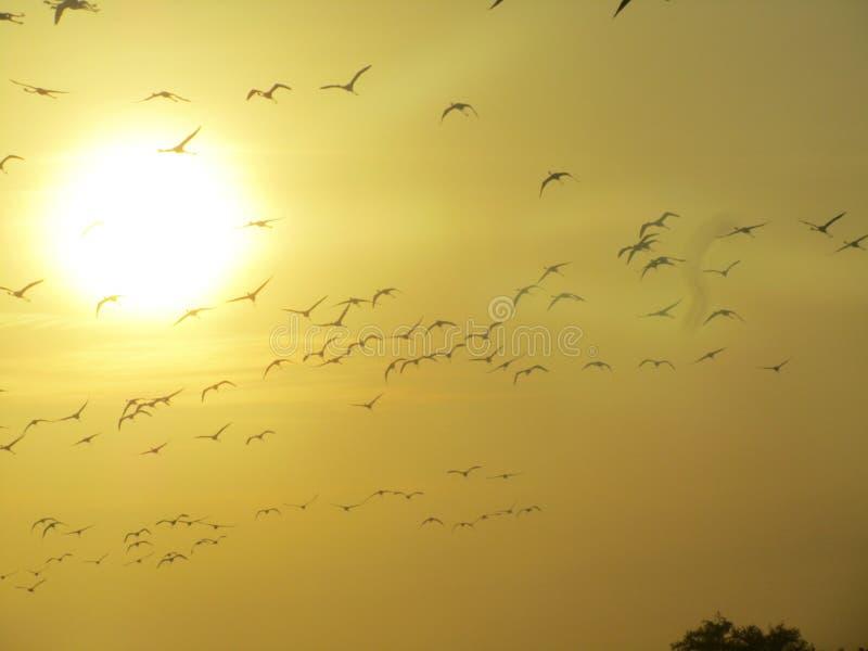 Flamingo ` s bei Sonnenuntergang stockfotografie