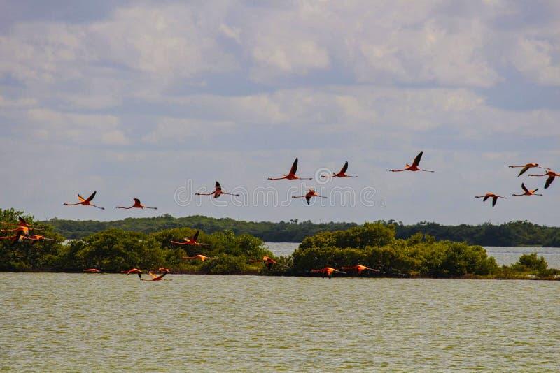 flamingo's die in de hemel vliegen royalty-vrije stock afbeelding