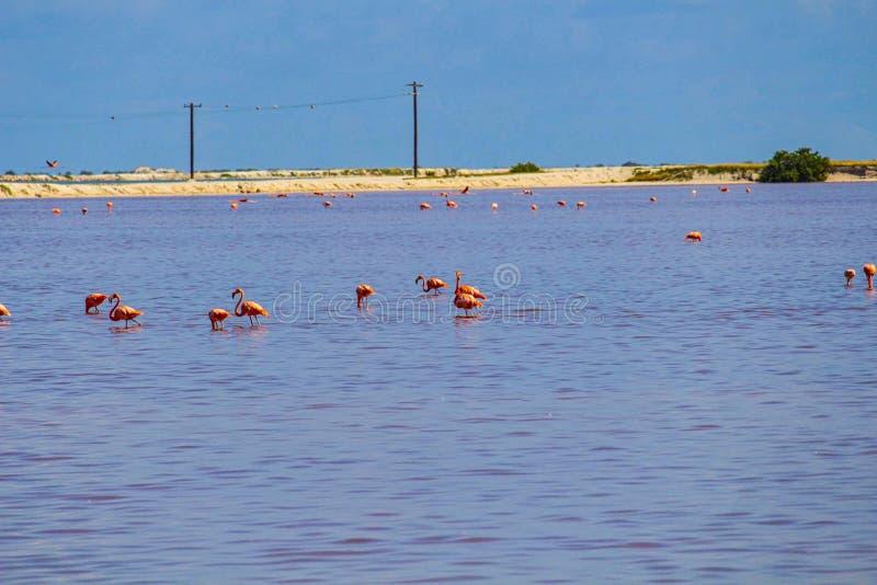 flamingo's die in de hemel vliegen stock foto