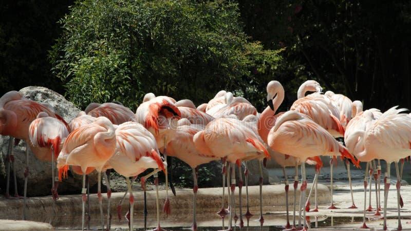 Flamingo's die omhoog de Zon doorweken royalty-vrije stock afbeelding