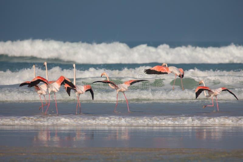 Flamingo's in het kustnatuurreservaat van DE Mond, Zuid-Afrika stock foto