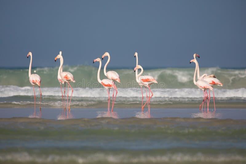 Flamingo's in het kustnatuurreservaat van DE Mond, Zuid-Afrika royalty-vrije stock afbeeldingen