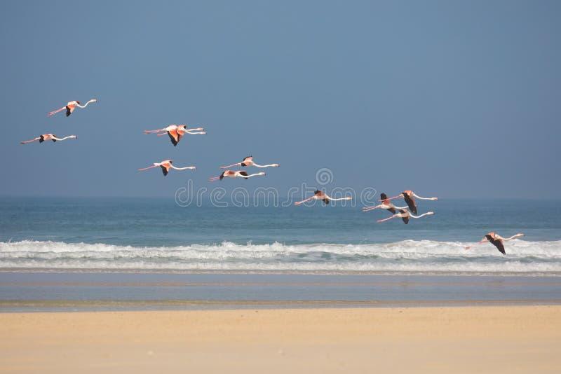 Flamingo's in het kustnatuurreservaat van DE Mond, Zuid-Afrika royalty-vrije stock foto's
