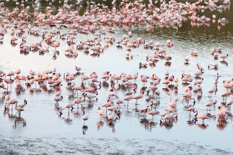 Flamingo's in Momela-Meer, het Nationale Park van Arusha, Tanzania royalty-vrije stock afbeeldingen